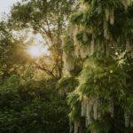 torrechia vechia tree